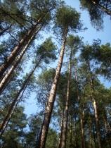 Trees_in_woods,_Czech_republic
