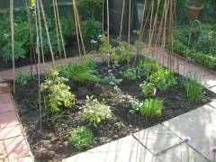 Garden 1st June 2013 006