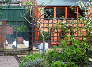 metal shed 005