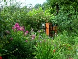 garden july 2014 001
