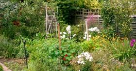 garden july 2014 003