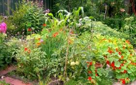 garden july 2014 004