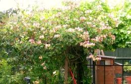 garden july 2014 008
